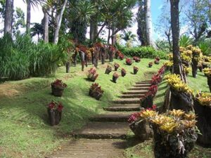 Balata Botanical Garden in Martinique