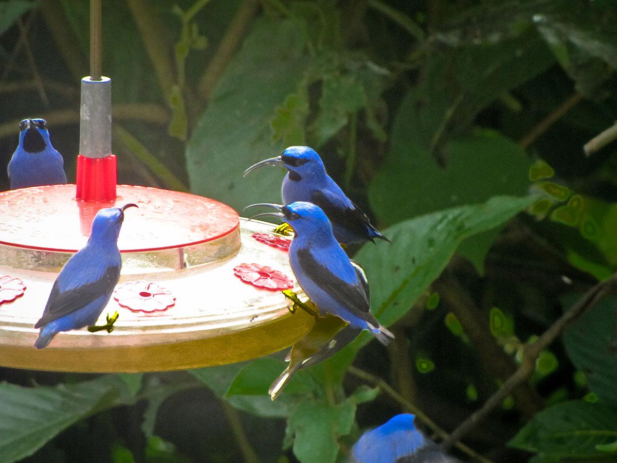trinidad-birds