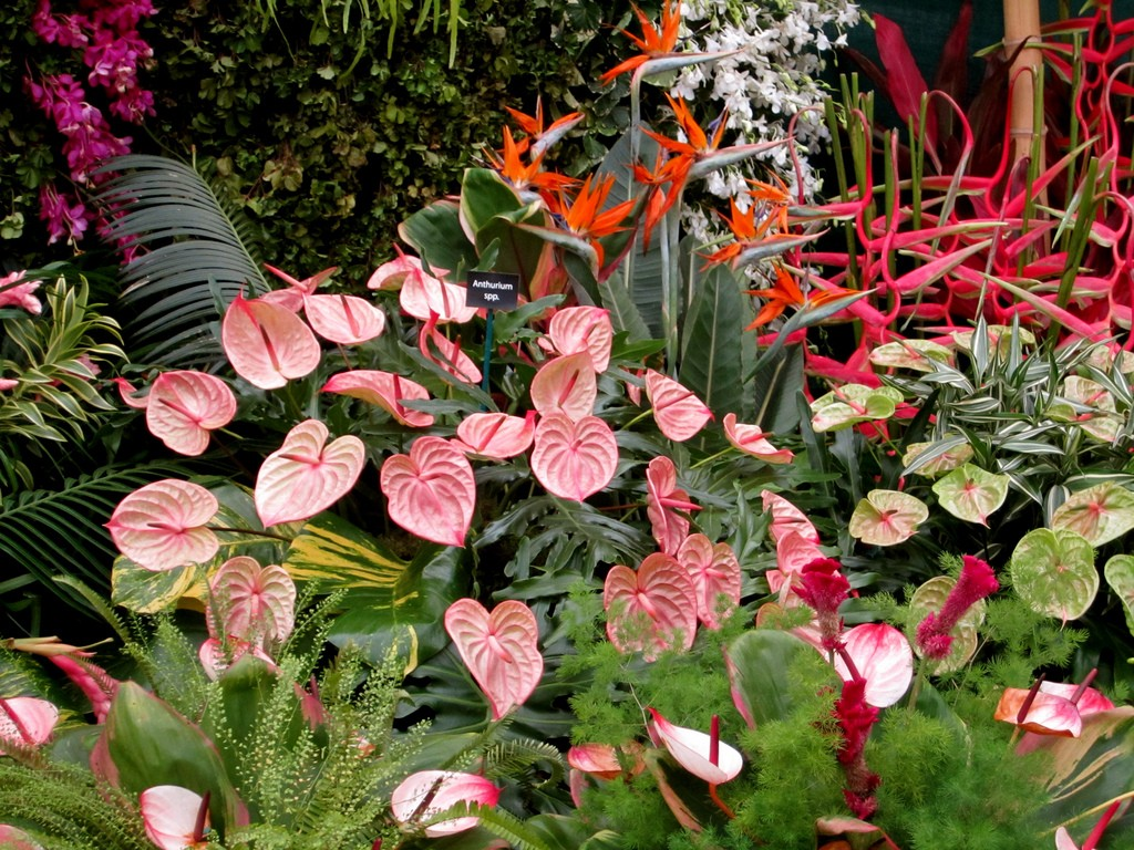 trinidad-plants