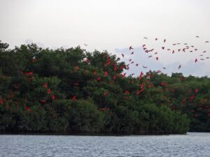 Caroni Swamp & Bird Sanctuary in Trinidad & Tobago