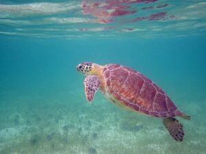Tobago Cays St. Vincent & the Grenadines