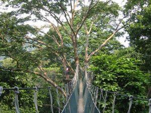 Iwokrama Forest in Guyana